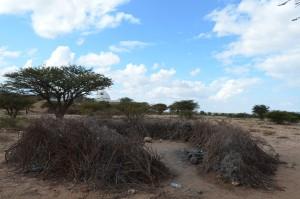 SOMALILAND-KADLEYE 2014 2459