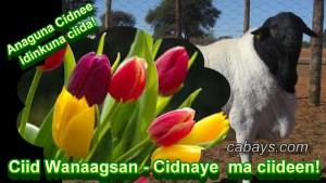 Ciid-wanaagsan