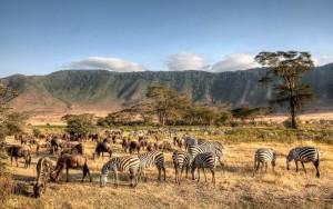 Ngorongoro Crater teems with life.